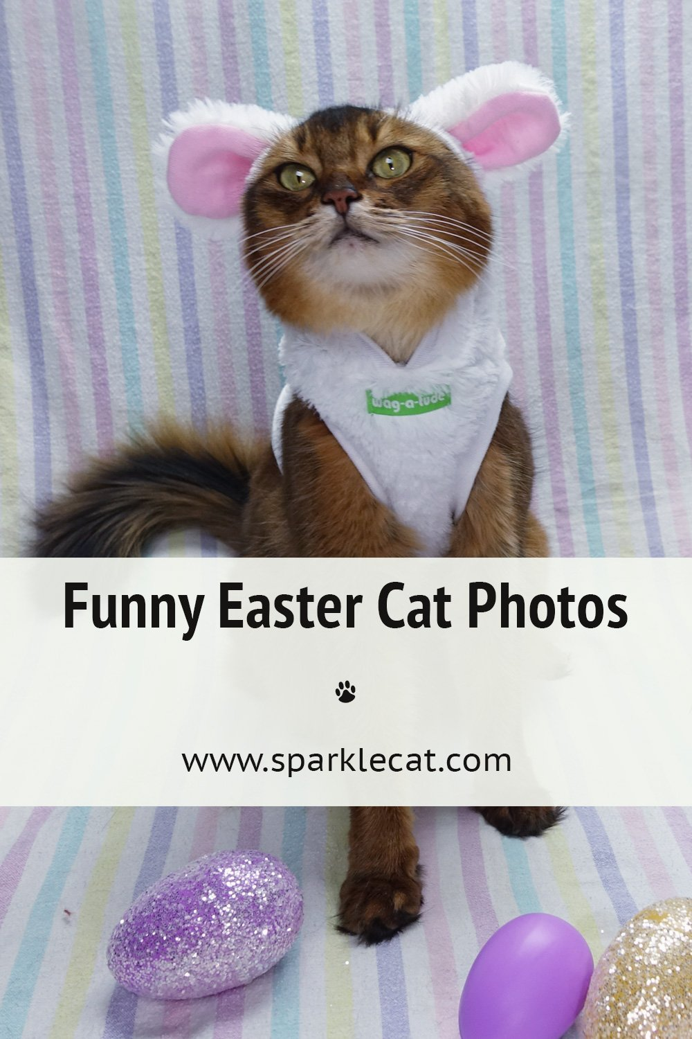 Never-Before-Seen Caturday Easter Outtake Flashbacks