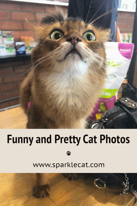 Pretty - and Pretty Funny Photos