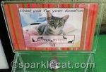 Adopt the Internet: Kitten Rescue