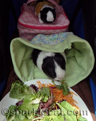He got a gourmet meal!