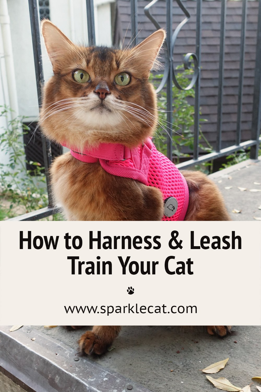 Harness and Leash Train a Cat - Featuring the Sleepypod Martingale Harness