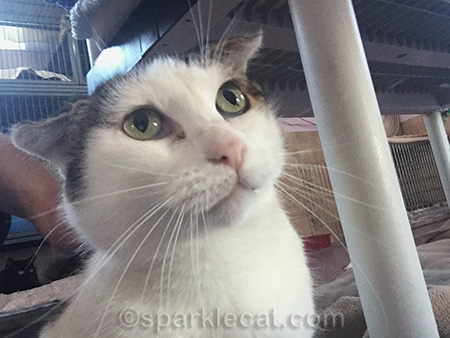 Harriet, Rescued cats, rescue cat, selfie, PAWSitively cats
