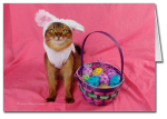 Hoppy Easter Kitty Card