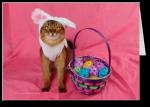Hoppy Easter Kitty Card