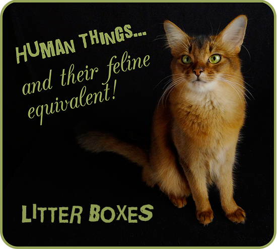 Human Things... and Their Feline Equivalent: Litter Boxes