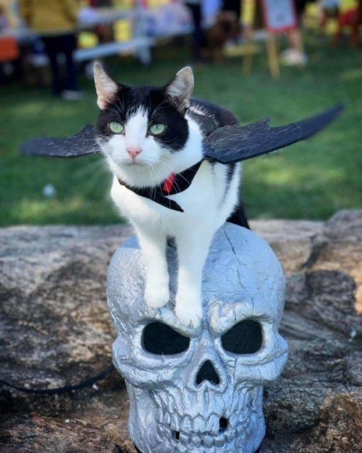 Acro-Cats' Jax