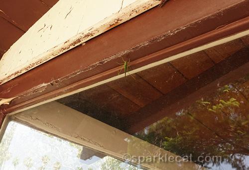 katydid on patio rafter