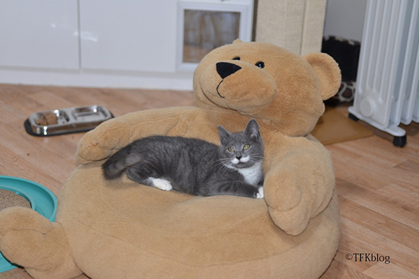 mustache kitten on happy bear