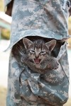 Honoring and Healing Our Veterans Today, Feline Style