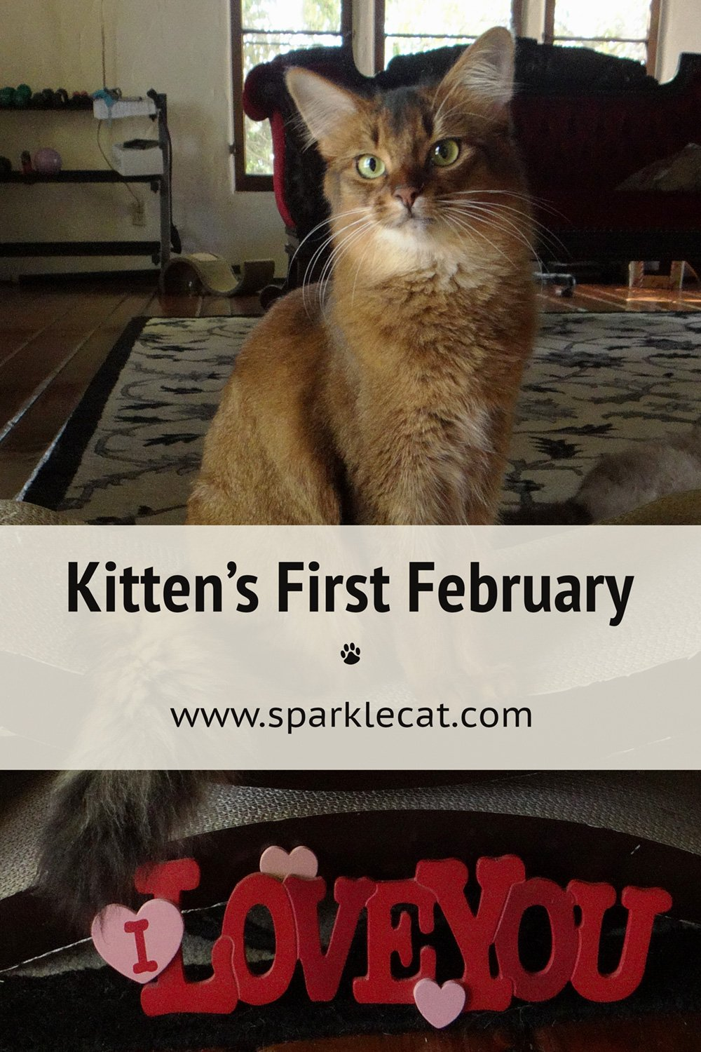 Throwback Thursday: My First February