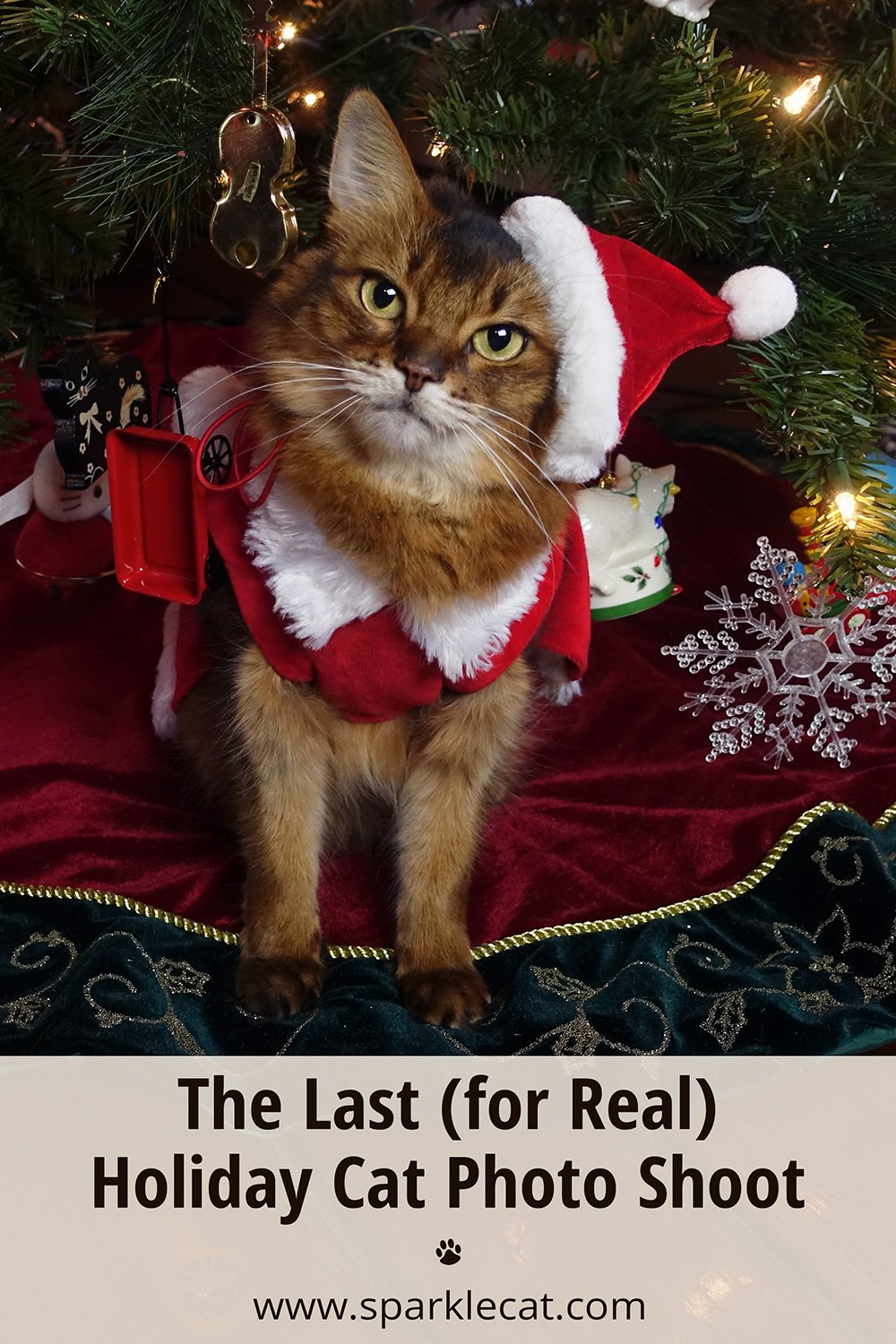 The Last Holiday Photo Session (for Real!)