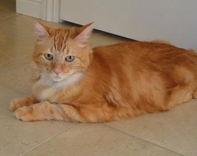 Leo is a very sweet cat