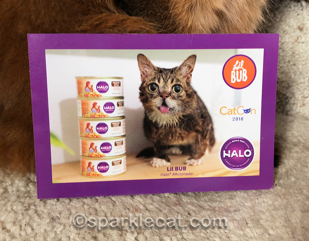 Promotional card of Halo and Lil BUB from CatCon
