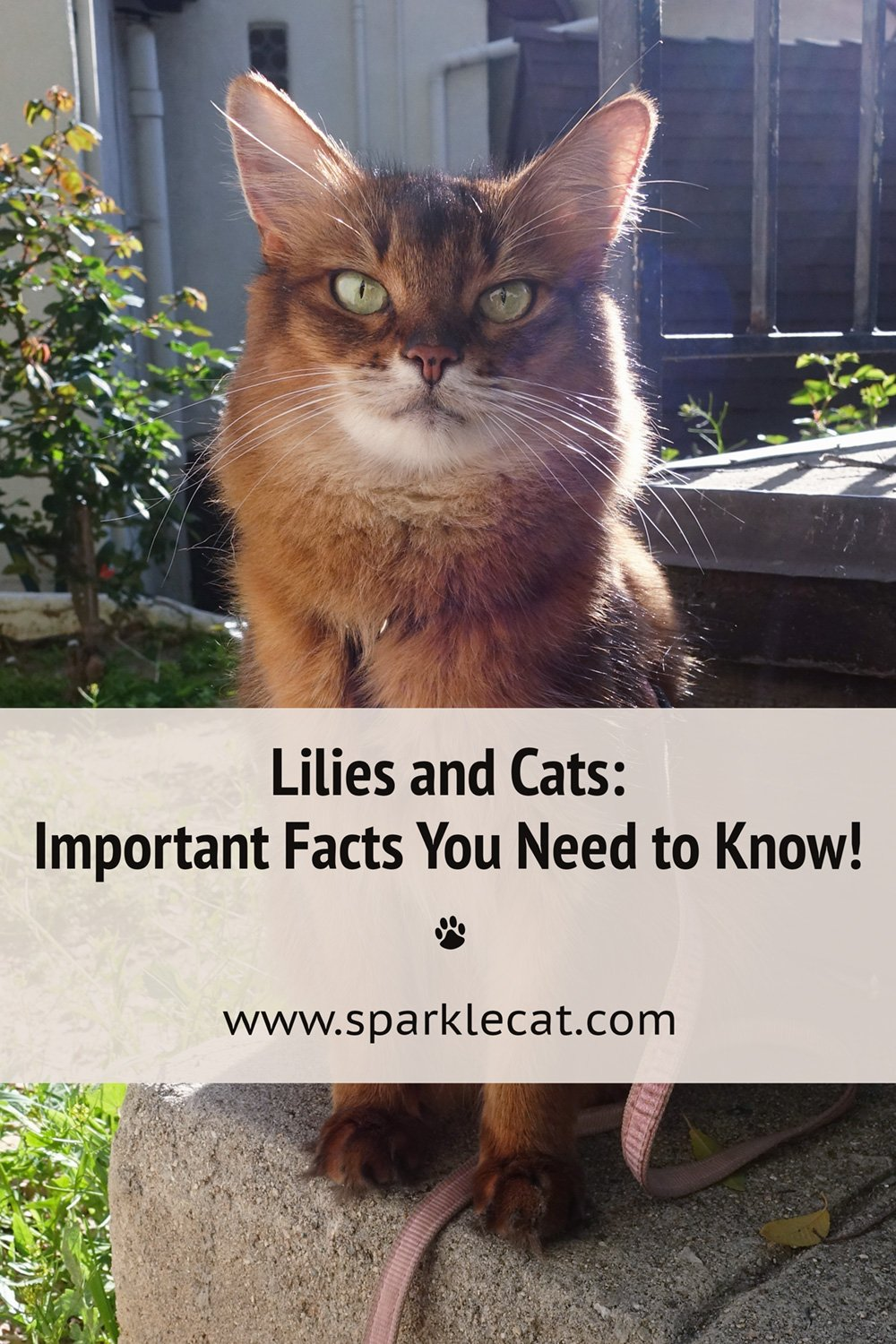 What You Need to Know About Cats and Lilies