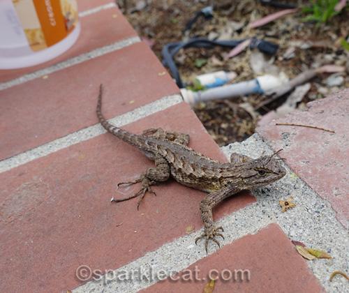 lizard on planter tile