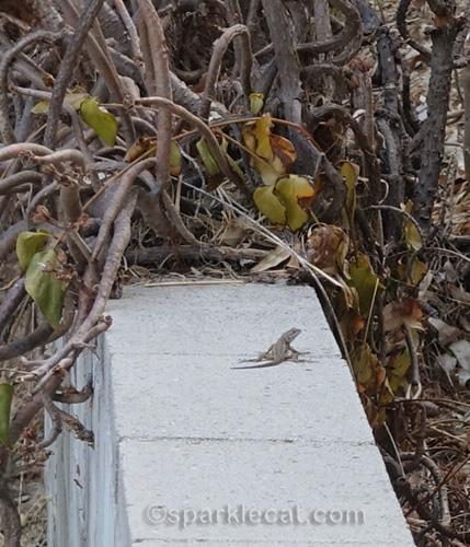 lizard on a concrete wall