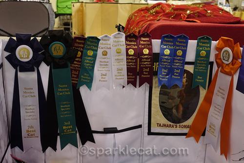 ribbons won by blue somali neuter