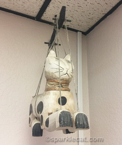 marionette cat in vet exam room