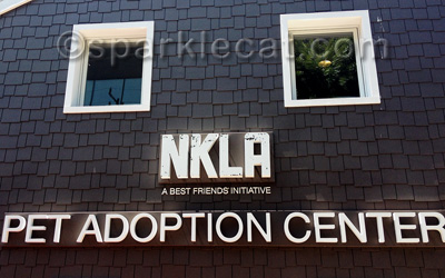 The front of the adoption center