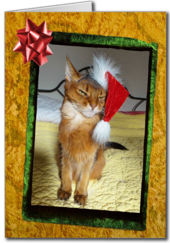 Naughty Kitty Christmas Card