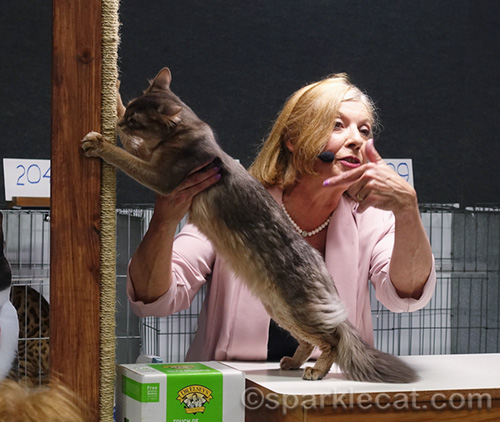Somali cat with Best of the Best announcer