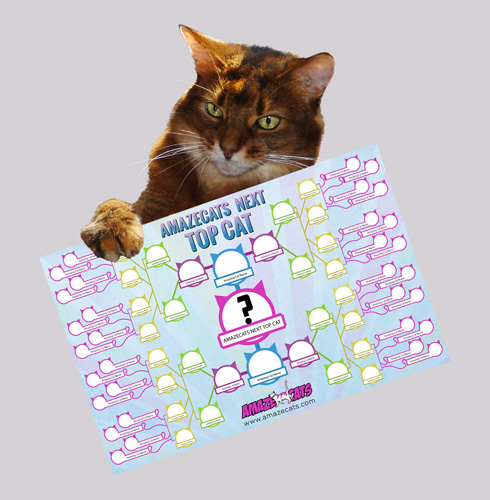 Who will be the AmazeCats Next Top Cat?