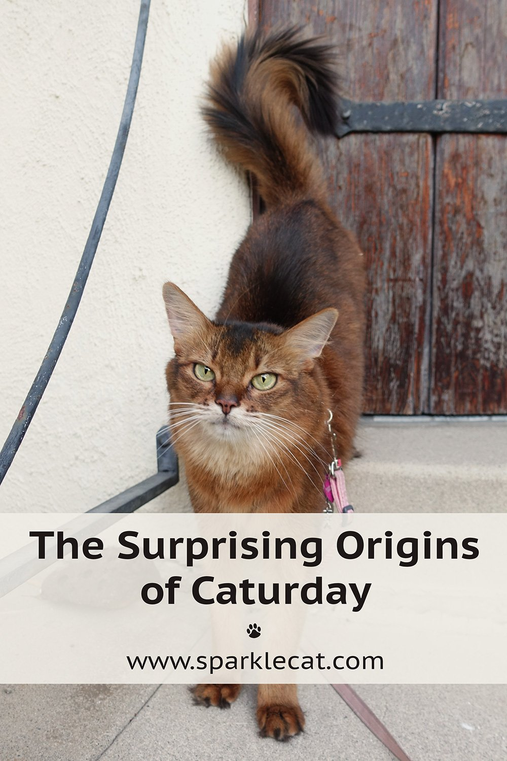 5 Fast Facts About the Origins of Caturday