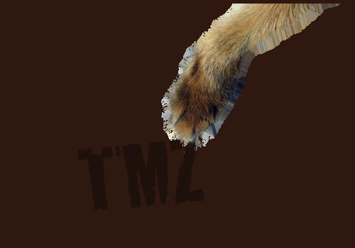 TMZ sucks, pure and simple