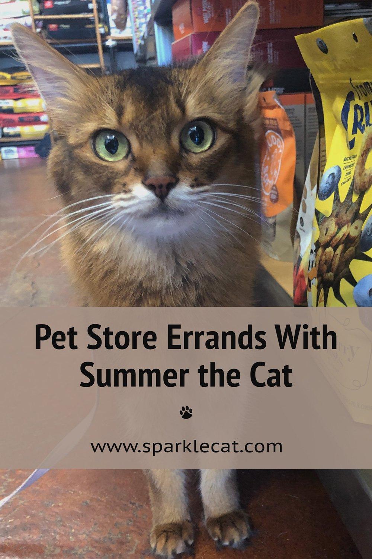 Productive Pet Shop Visit