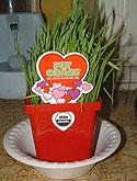 Valentines pet grass