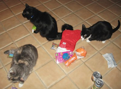 Hm. I'm wondering if the tuxie is slightly dissatisfied with the prizes.