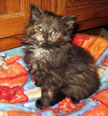 Don't be fooled by the cuteness - torties need to come with a list of instructions!