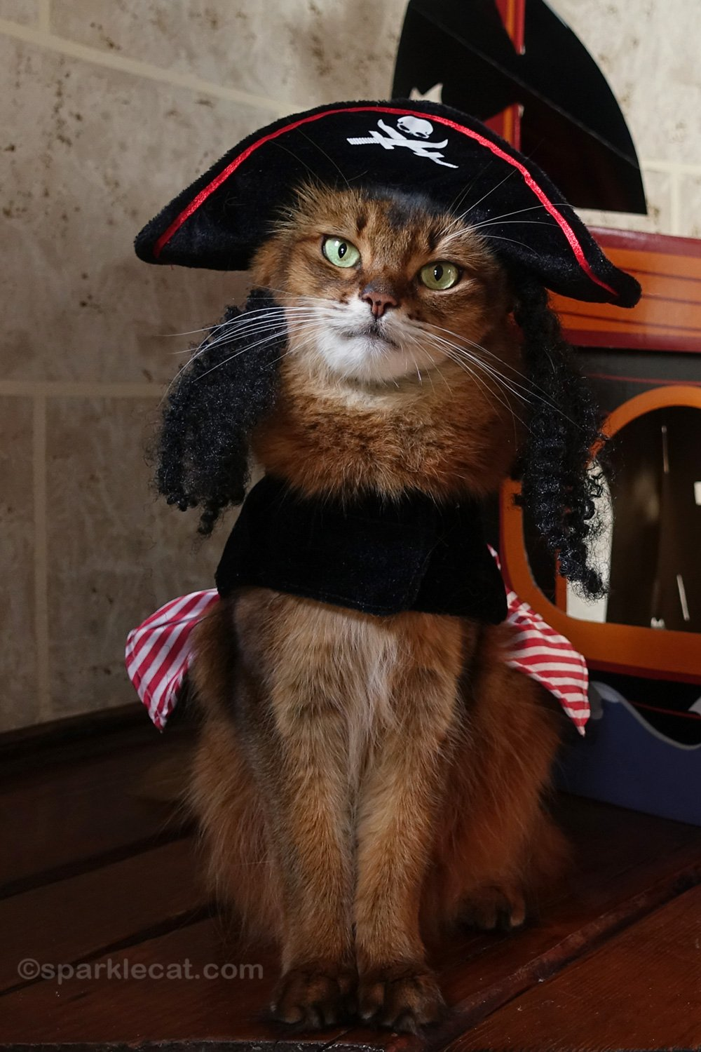 My Cat Pirate Day, on Video