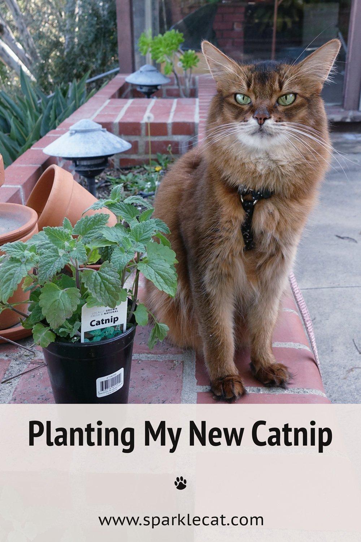 Planting My New Catnip
