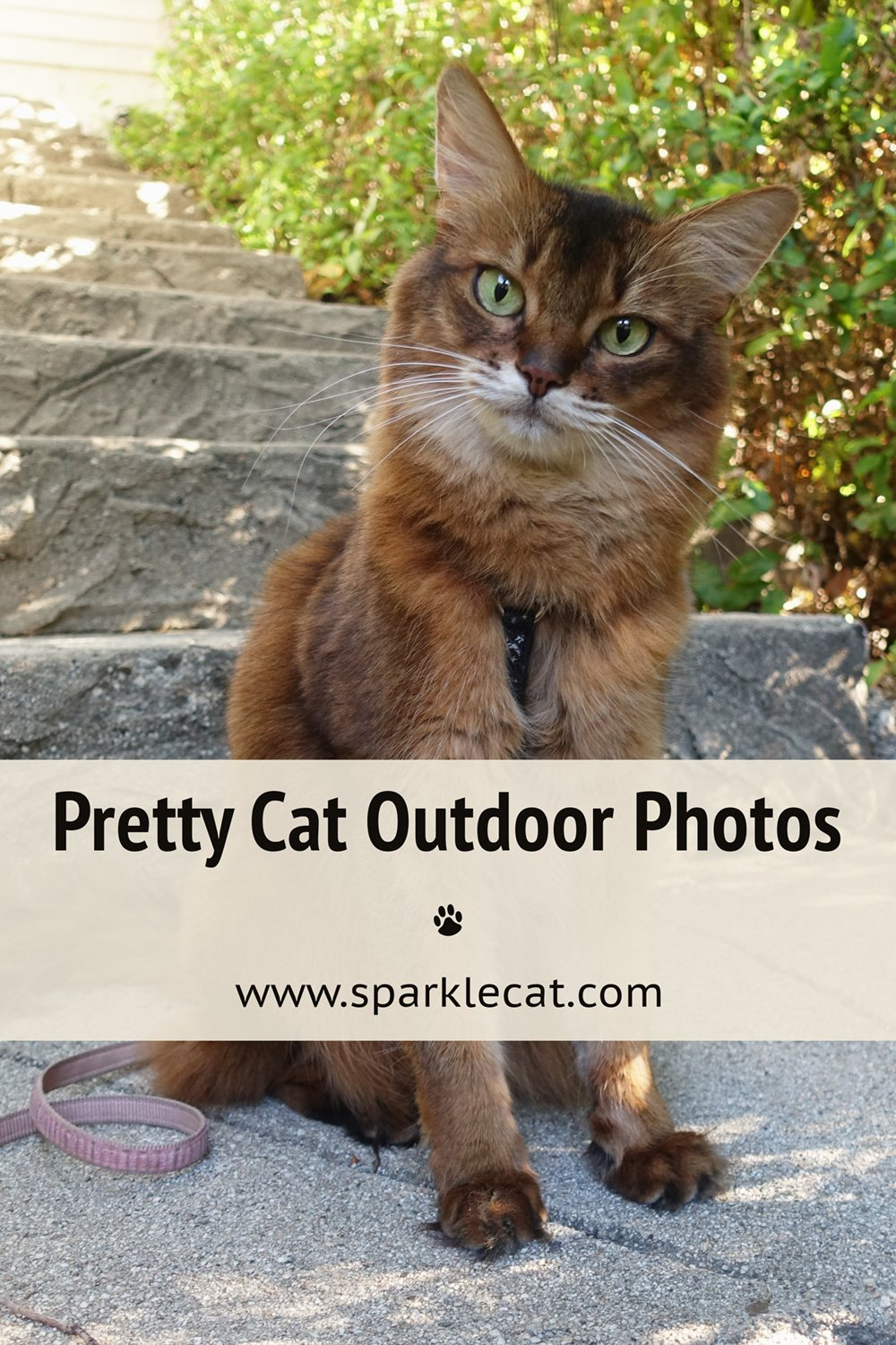Quickie Outdoor Photo Shoot