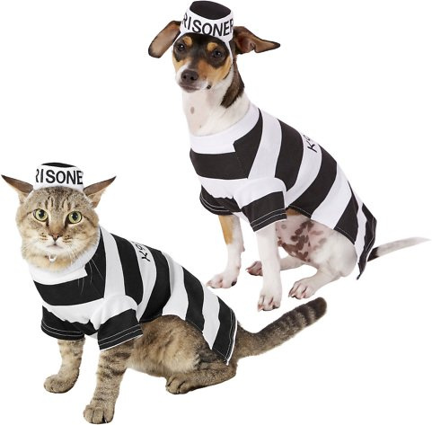 Frisco Dog and Cat Costume