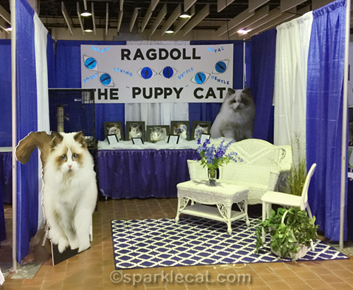 Ragdoll booth at Meet the Breeds 2018