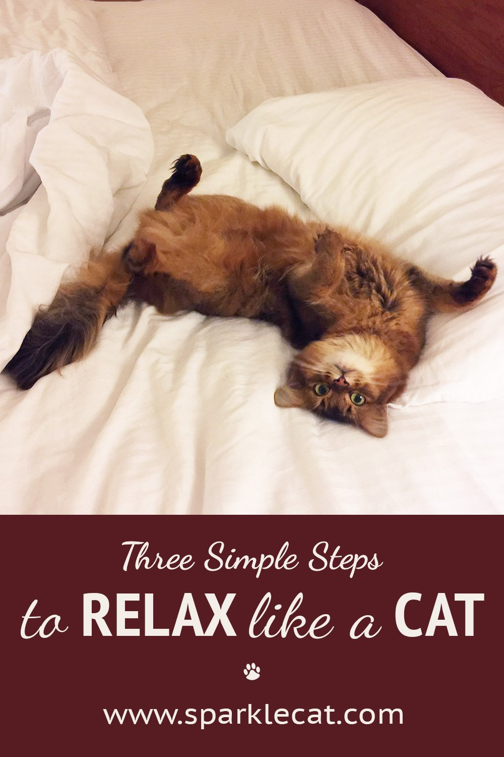 Relax Like a Cat: A How-To in Three Simple Steps