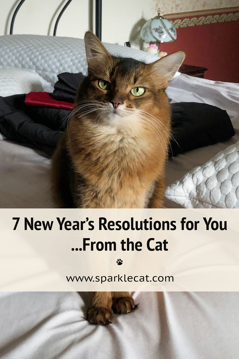 7 New Year\'s Resolutions for Cats to Teach Their Humans