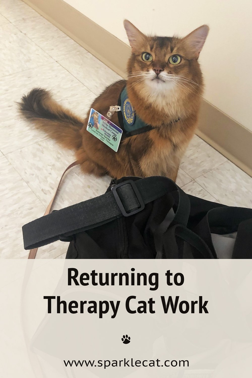 First Therapy Cat Visit at the Big Hospital in Over a Year!
