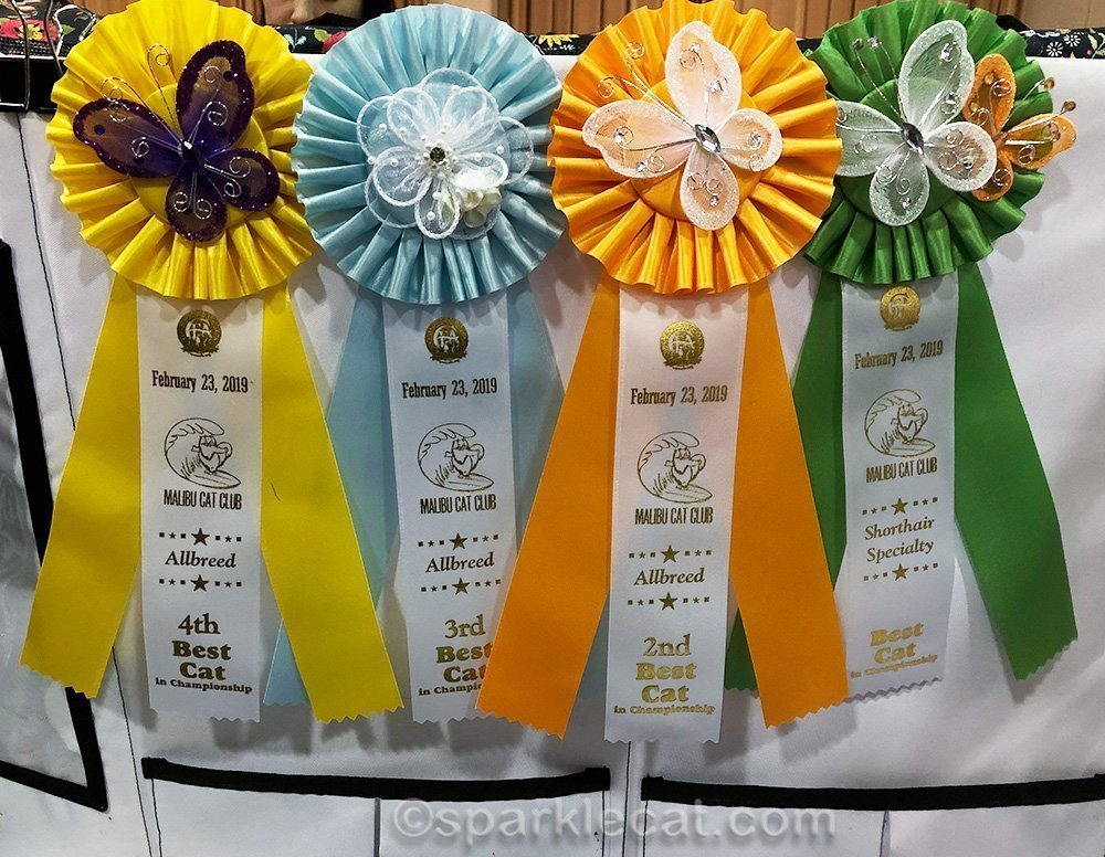ribbons won by male somali cat at Glendale cat show