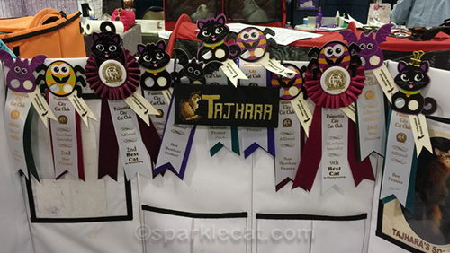 all the ribbons crazy louie won at the glendale cat show