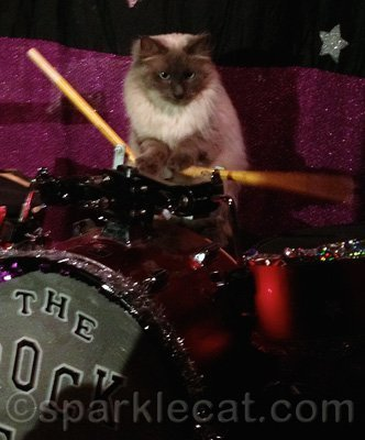 This kitty did NOT drum like a girl!