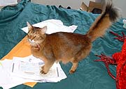 I absorb the information on these docs through my paw pads