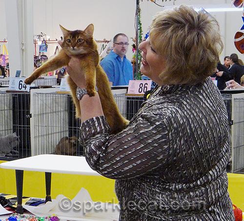somali kitten and cat judge