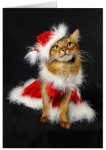 Just in Time: New Kitty Holiday Cards!