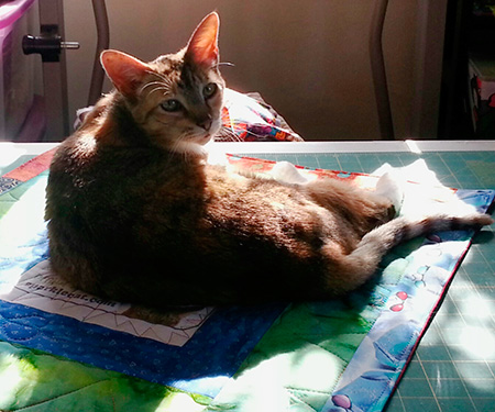 I hear she is quite the catnip quilt connoisseur!
