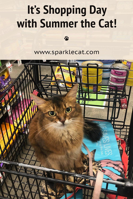 Cat Food Shopping Fun