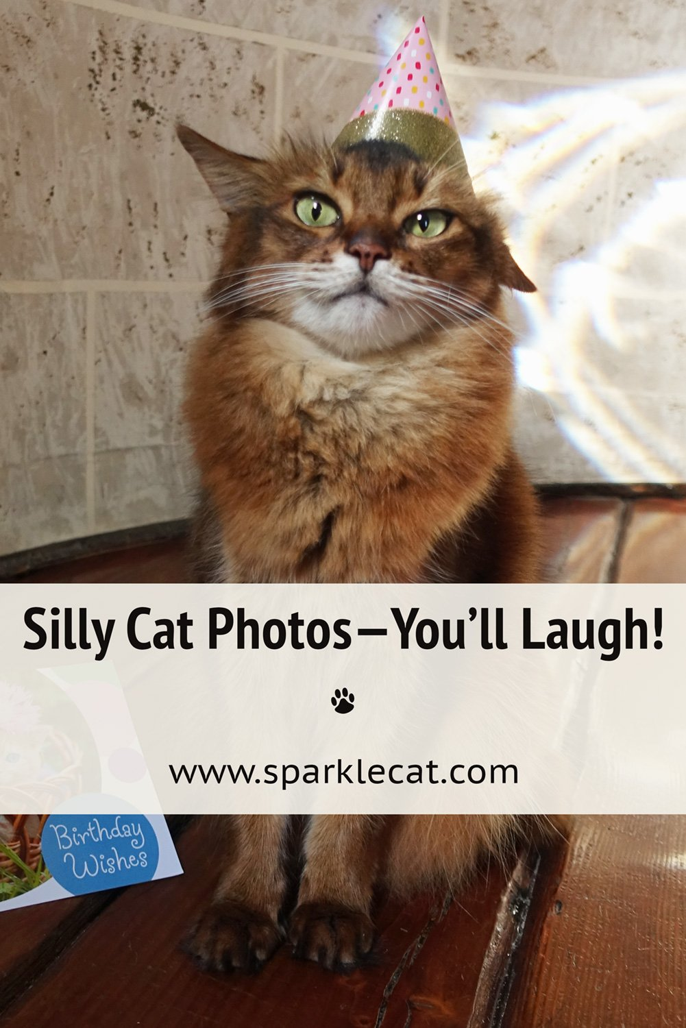 This Week\'s Silly Outtakes