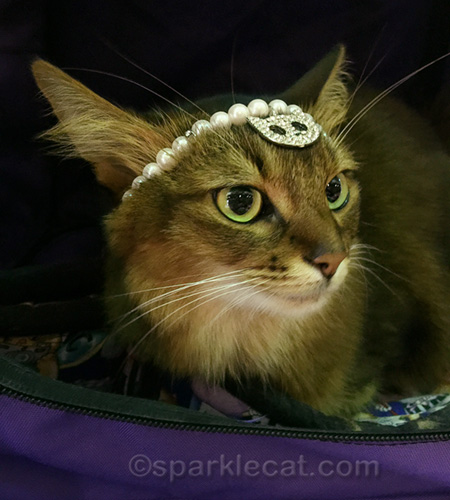 somali cat wearing pearl and rhinestone headband